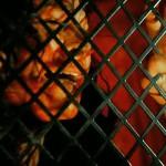 Death Stop Holocaust movie