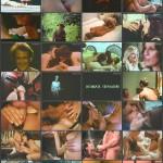Bucky's '70s Triple XXX Movie House Trailers Vol. 17 movie