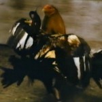 Rooster: Spurs of Death! movie