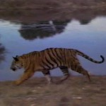 A Tiger's Tale movie
