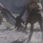 Savage Man Savage Beast movie