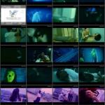 Turtle Vision movie