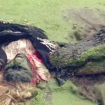 Gator Green movie