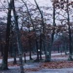 Dead Leaves movie