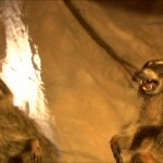 Coons! Night of the Bandits of the Night movie