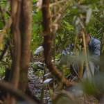 The Jungle movie