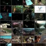 Rituals movie