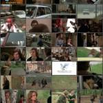 Young, Violent, Dangerous movie