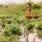 The Animal's Skin movie