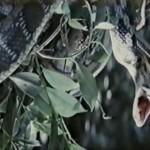 The Serpent Warriors movie
