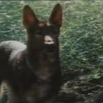 El perro movie