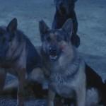 Monster Dog movie